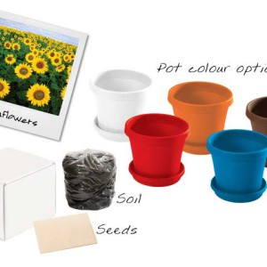 Sunflowers in a Box - PDC/G/OCQ-YGEAH - Image 1